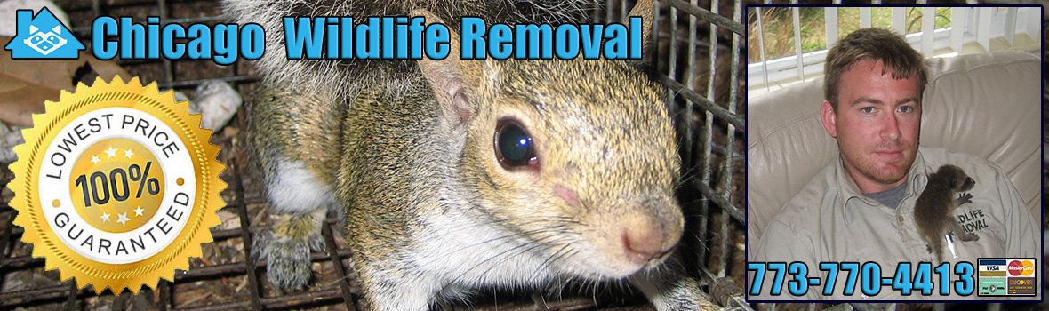 Chicago Wildlife and Animal Removal